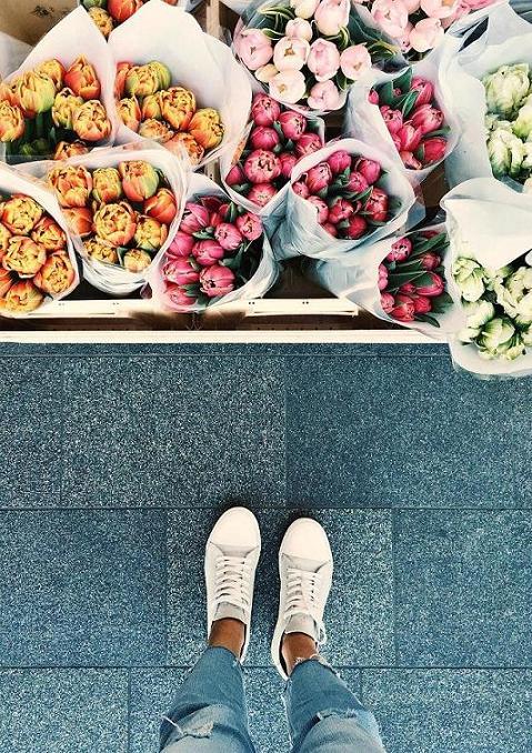Viaggio nella terra dei tulipani