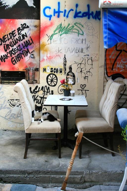 istanbul la città dei gatti